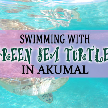 Swimming and snorkeling with green sea turtles in Akumal Mexico