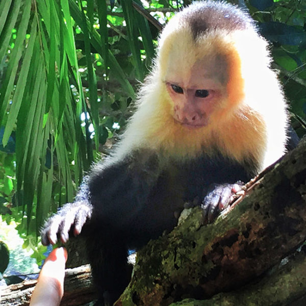Tips for Visiting Manuel Antonio National Park